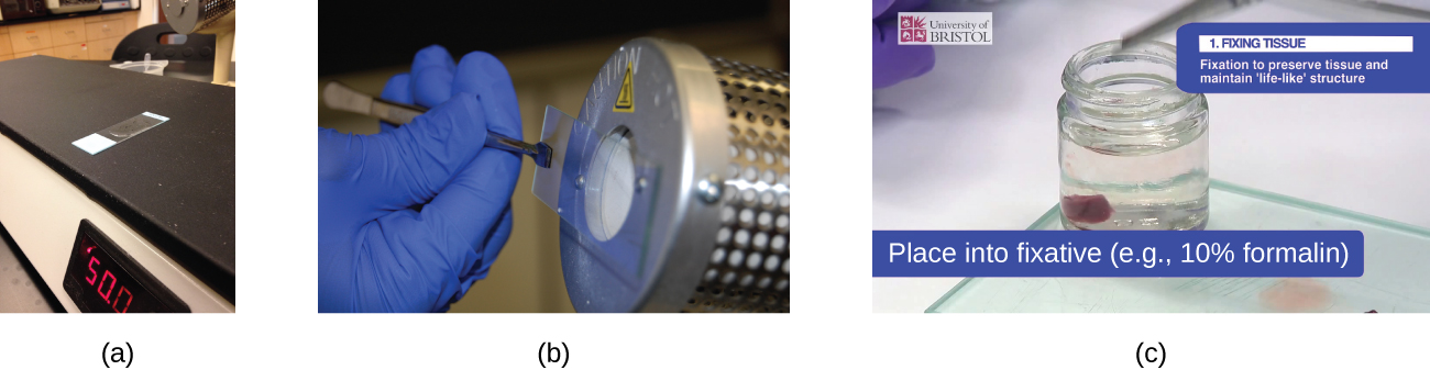 Photograph a shows a slide sitting on a flat heating surface. Photograph b shows a person holding a slide in front of a heated metal cylinder. Photograph c shows a bit of tissue in a container of clear liquid. Caption reads Fixing tissue: fixation to preserve tissue and maintain life-like structure; place into fixative (eg 10% formalin).