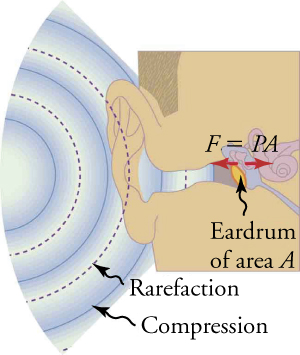 A sound wave with areas of alternating compression and rarefaction enter an ear canal and eardrum.