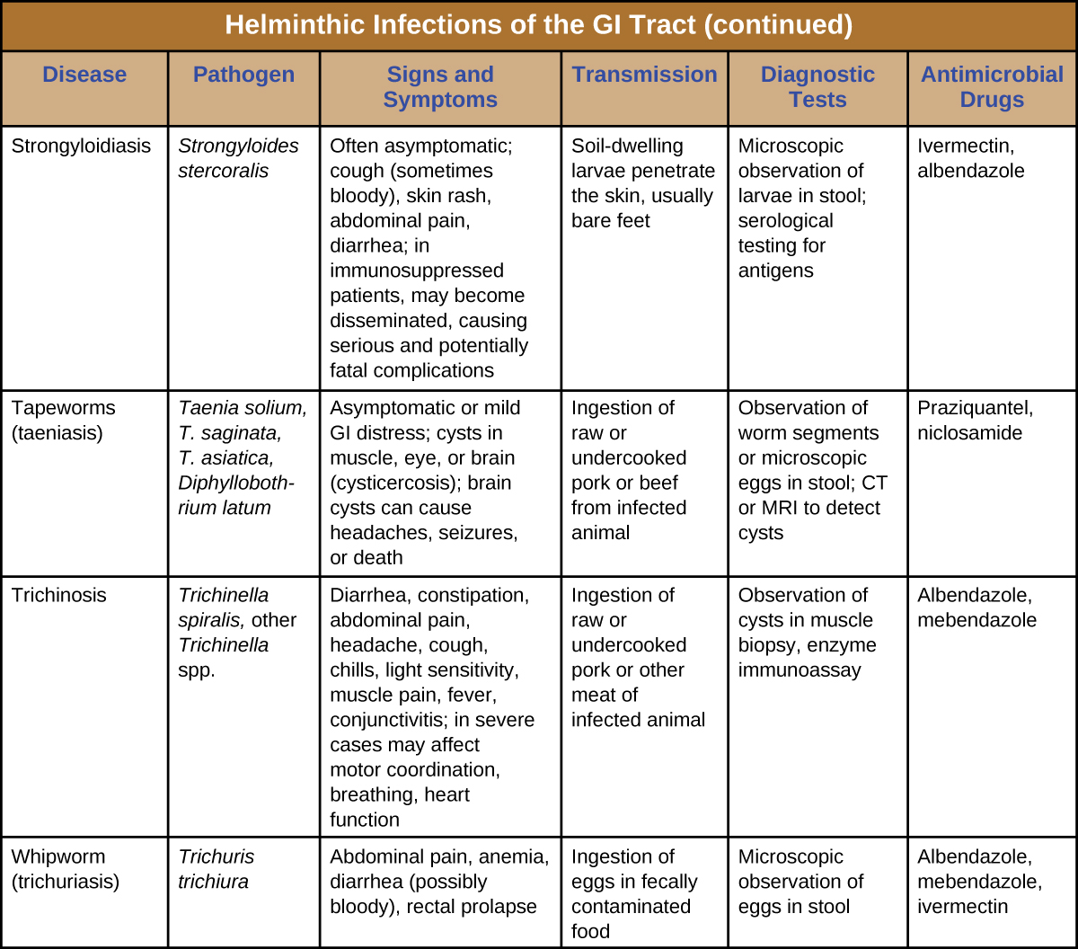 Continuation of table titled: Helminthic Infections of the GI Tract. Columns: Disease, Pathogen, Signs and Symptoms, Transmission, Diagnostic Tests, Antimicrobial Drugs. Strongyloidiasis; Strongyloides stercoralis; Often asymptomatic; cough (sometimes bloody), skin rash, abdominal pain, diarrhea; in immunosuppressed patients, may become disseminated, causing serious and potentially fatal complications Soil-dwelling larvae penetrate the skin, usually bare feet; Microscopic observation of larvae in stool; serological testing for antigens; Ivermectin, albendazole. Tapeworms (taeniasis) ; Taenia solium, T. saginata, T. asiatica, Diphyllobothrium latum; Asymptomatic or mild GI distress; cysts in muscle, eye, or brain (cysticercosis); brain cysts can cause headaches, seizures, or death; Ingestion of raw or undercooked pork or beef from infected animal; Observation of worm segments or microscopic eggs in stool; CT or MRI to detect cysts; Praziquantel, niclosamide. Trichinosis; Trichinella spiralis, other Trichinella spp. Diarrhea, constipation, abdominal pain, headache, cough, chills, light sensitivity, muscle pain, fever, conjunctivitis; in severe cases may affect motor coordination, breathing, heart function; Ingestion of raw or undercooked pork or other meat of infected animal; Observation of cysts in muscle biopsy, enzyme immunoassay; Albendazole, mebendazole. Whipworm (trichuriasis); Trichuris trichiura; Abdominal pain, anemia, diarrhea (possibly bloody), rectal prolapse; Ingestion of eggs in fecally contaminated food Microscopic observation of eggs in stool; Albendazole, mebendazole, ivermectin.