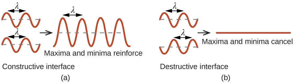 "A pair of images is shown that has four sections. In the first section, two sinusoidal waves are shown, one drawn above the other, and a section from the top of one curve to the top of the next curve is labeled ""lambda."" The curves align with one another. The phrase below this reads ""Constructive interference."" A right facing arrow leads from the first section to the second, which shows one larger sinusoidal curve that has higher and lower peaks and troughs. A section from the top of one curve to the top of the next curve is labeled ""lambda"" and the phrase below this reads ""Maxima and minima reinforce."" In the second section, two sinusoidal waves are shown, one drawn above the other, and a section from the top of one curve to the top of the next curve is labeled ""lambda."" The curves do not align with one another. The phrase below this reads ""Destructive interference."" A right facing arrow leads from the first section to the second, which shows one flat line. The phrase below this reads ""Maxima and minima cancel."""