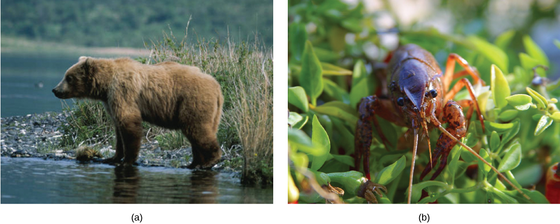 The first photo shows a bear. The next photo shows a crayfish.