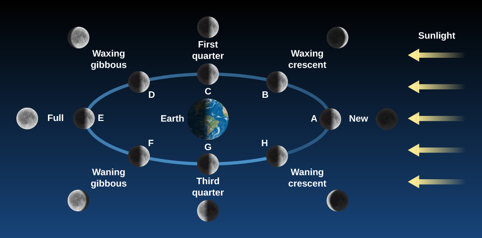 "Phases of the Moon. The Earth is drawn as the center of a blue ellipse representing the Moon's orbit. At right, yellow arrows labeled ""Sunlight"" point toward the Earth and Moon. The Moon is drawn in eight positions along its orbit, along with an illustration of the Moon as it would appear to an observer on Earth. At position ""A"" at far right, the Moon is between the Earth and Sun. At that point the Moon is ""New"". At position ""B"" at upper right, the observer would see a ""Waxing crescent"". At position ""C"" at top center, the observer would see ""First quarter"". At position ""D"" at upper left, the observer would see the ""Waxing gibbous"" phase. At position ""E"", the Earth is now between the Sun and Moon, and an observer would see a ""Full"" Moon. At position ""F"" at lower left, the observer would see the ""Waning gibbous"" phase. At position ""G"" at bottom center, an observer would see the ""Third quarter"" Moon. Finally, at position ""H"" at lower right, the observer would see the ""Waning crescent"" Moon."
