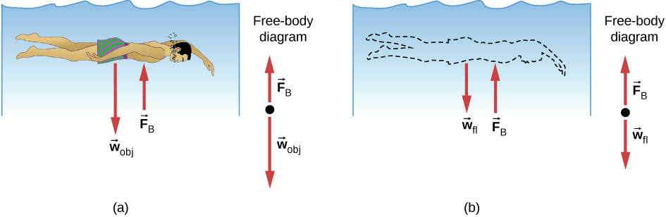 Figure A is a drawing of a person submerged in water. Force wobj is expressed by the person, force Fb is applied by the water to the person. Figure B is a drawing in which the person is replaced by water. Now Force wfl is expressed by the water that replaced the person, force Fb remains the same.
