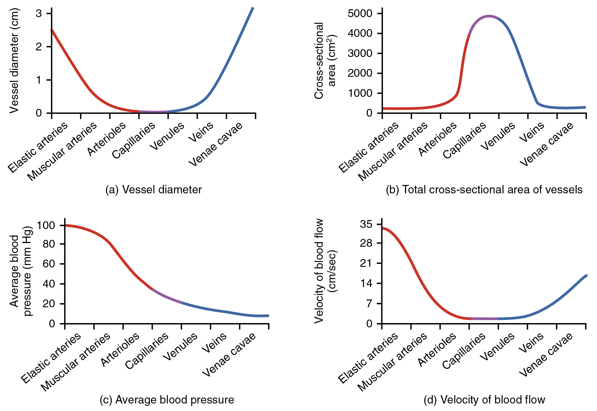 This figure shows four graphs. The top left graph shows the vessel diameter for different types of blood vessels. The top right panel shows cross-sectional area for different blood vessels. The bottom left panel shows the average blood pressure for different blood vessels, and the bottom right panel shows the velocity of blood flow in different blood vessels.