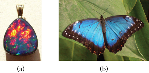 (a) Photograph of an opal, with a rounded triangular shape. Most of the upper portion of the triangle is red and yellow. The lower portion is blue, green, and purple. (b) Photograph of a butterfly on a leaf. The wings are blue with white spots at the points of the wings and black bands at the rear edges of the wings.