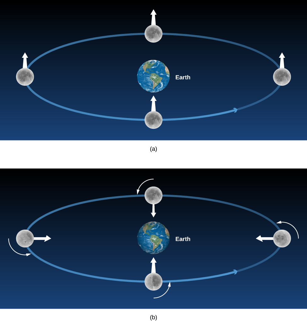 The Moon without and with Rotation. In panel (a), at top, the Earth is drawn at the center of a blue ellipse representing the orbit of the Moon. The Moon is shown at four positions along its orbit far right, top center, far left and bottom center. Each image of the Moon has a white arrow pointing upward. In (b), at bottom, the Earth is drawn at the center of a blue ellipse representing the orbit of the Moon. The Moon is shown at four positions along its orbit far right, top center, far left and bottom center. A short counter-clockwise arrow is drawn ¼ away around each Moon image indicating its rotation. In contrast to panel (a), the white arrows on the Moon each now point toward the Earth.