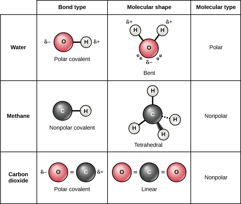 Table compares water, methane and carbon dioxide molecules. In water, oxygen has a stronger pull on electrons than hydrogen resulting in a polar covalent O-H bond. Likewise in carbon dioxide the oxygen has a stronger pull on electrons than carbon and the bond is polar covalent. However, water has a bent shape because two lone pairs of electrons push the hydrogen atoms together so the molecule is polar. By contrast carbon dioxide has two double bonds that repel each other, resulting in a linear shape. The polar bonds in carbon dioxide cancel each other out, resulting in a nonpolar molecule. In methane, the bond between carbon and hydrogen is nonpolar and the molecule is a symmetrical tetrahedron with hydrogens spaced as far apart as possible on the three-dimensional sphere. Since methane is symmetrical with nonpolar bonds, it is a nonpolar molecule.