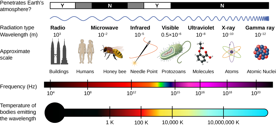 Figure shows the EM spectrum. It shows various types of waves with their wavelengths, frequencies, approximate scales, temperature of bodies emitting those waves and whether those waves penetrate the earth's atmosphere or not. The waves are: Radio waves, with wavelength of 10 to the power 3 m, frequency of 10 to the power 4 Hz, at the scale of buildings, penetrating the atmosphere; microwaves, with wavelength of 10 to the power minus 2 m, frequency of roughly 10 to the power 10 Hz, at the scale of bees to humans, not penetrating the atmosphere and emitted by bodies at 1 degree K; infrared waves with wavelength of 10 to the power minus 5 m, frequency of roughly 10 to the power 13 Hz, at the scale of a needle point, partly penetrating the atmosphere and emitted by bodies at 100 degree K; visible light waves with wavelength of 0.5 into 10 to the power minus 6 m, frequency of 10 to the power 15 Hz, at the scale of protozoans, penetrating the atmosphere and emitted by bodies at 10,000 degree K; ultraviolet waves with wavelength of 10 to the power minus 8 m, frequency of 10 to the power 16 Hz, at the scale of molecules, not penetrating the atmosphere and emitted by bodies at roughly 5 million degree K; X-rays with wavelength of 10 to the power minus 10 m, frequency of 10 to the power 18 Hz, at the scale of atoms, not penetrating the atmosphere and emitted by bodies above 10 million degree K; Gamma rays with wavelength of 10 to the power minus 12 m, frequency of roughly 10 to the power 20 Hz, at the scale of atomic nuclei, not penetrating the atmosphere and emitted by bodies much above 10 million degree K.