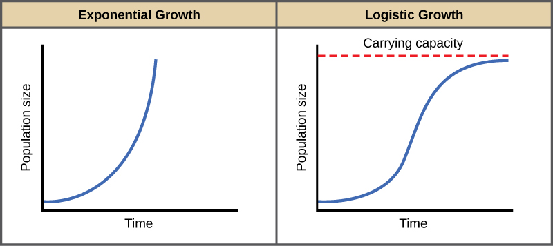 Both graphs (a) and (b) plot population size versus time. In graph (a), exponential growth results in a curve that gets increasingly steep, resulting in a J-shape. In graph (b), logistic growth results in a curve that gets increasingly steep, then levels off when the carrying capacity is reached, resulting in an S-shape