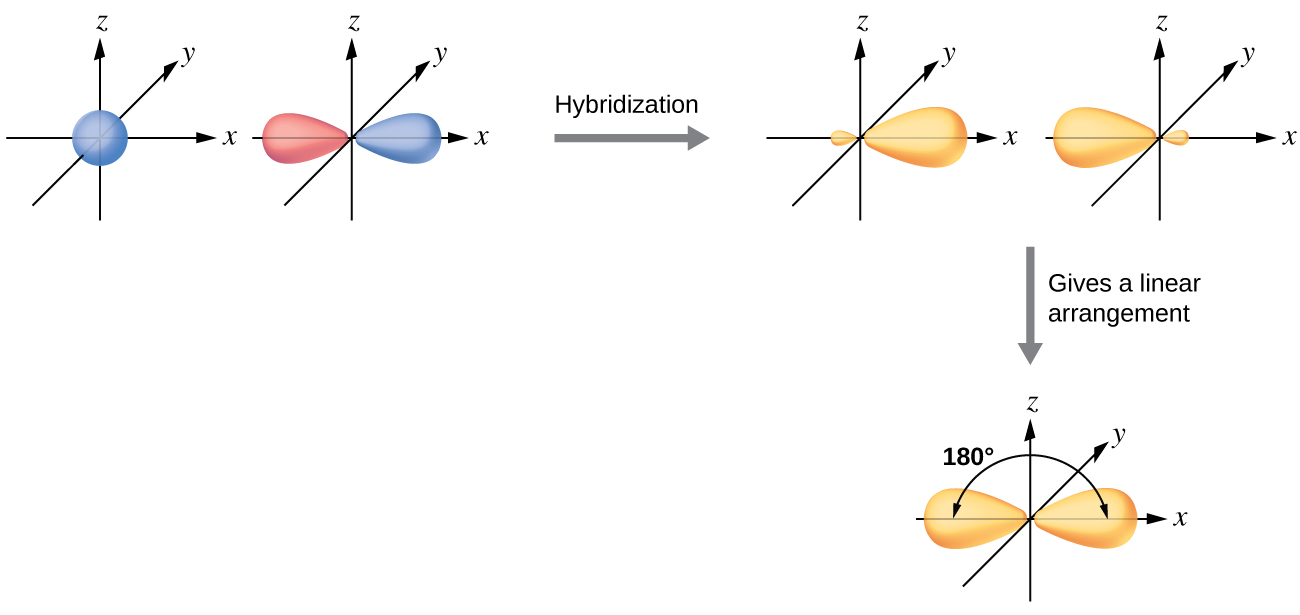 "A series of three diagrams connected by a right-facing arrow that is labeled, ""Hybridization,"" and a downward-facing arrow labeled, ""Gives a linear arrangement,"" are shown. The first diagram shows a blue spherical orbital and a red, peanut-shaped orbital, each placed on an X, Y, Z axis system. The second diagram shows the same two orbitals, but they are now purple and have one enlarged lobe and one smaller lobe. Each lies along the x-axis in the drawing. The third diagram shows the same two orbitals, but their smaller lobes now overlap along the x-axis while their larger lobes are located at and labeled as ""180 degrees"" from one another."