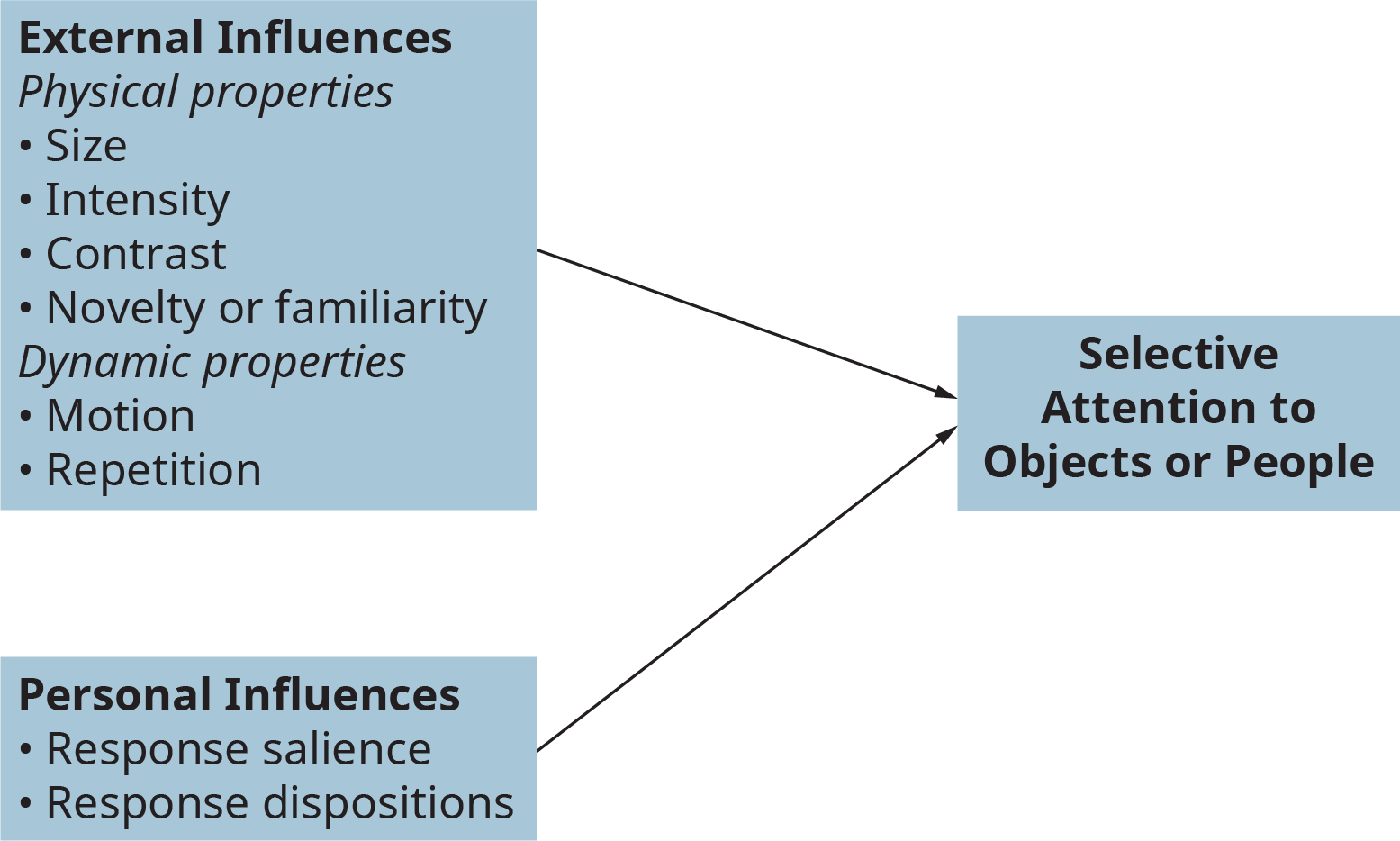 An illustration shows the major influences on selective attention.