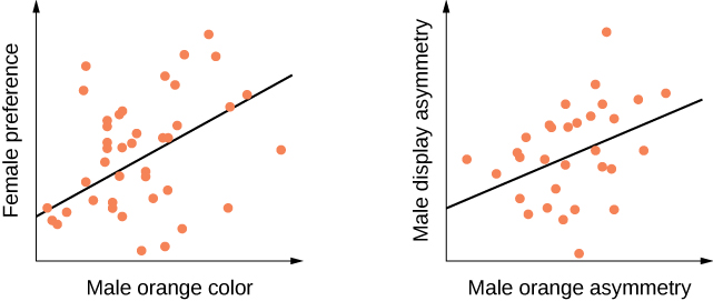 This figure is a graph that has a vertical axis labeled Female preference and a horizontal axis labeled Male orange Color. Majority of the orange dots cluster about a quarter into the line and hover closer to it with some of them variously underneath the line and a few orange dots to the upper right corner. The second graph is labeled on the vertical axis Male Display asymmetry and the horizontal line labeled Male orange asymmetry. Most of the dots clutter along the diagonal line.