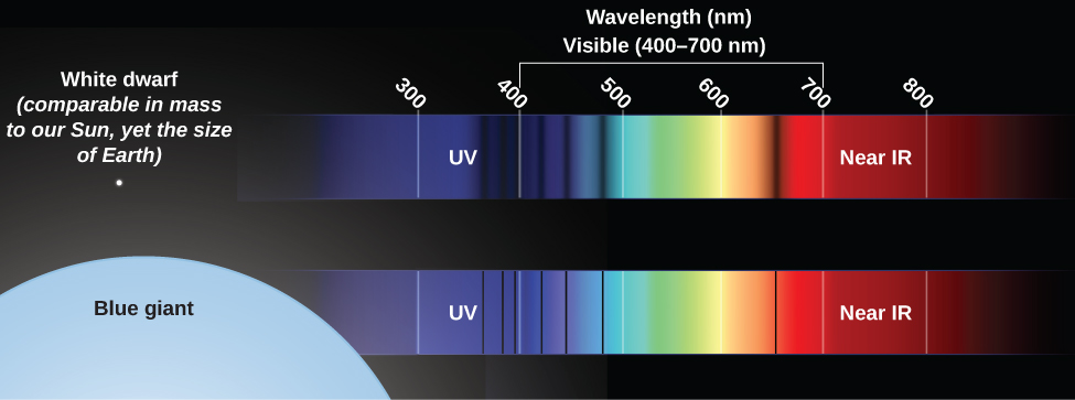 Illustration showing the difference between spectra of stars at the same temperature but different pressures. At top left is a small white dot representing a white dwarf star. To its right is its spectrum, with a wavelength scale in nanometers (nm) running from 300 nm on the left to 800 nm on the right. Crossing the white dwarf spectrum are very broad, fuzzy vertical black absorption lines, which remove a great deal of light from the band of color. At bottom left is shown the partial disk of a blue giant, vastly larger than the white dot representing the white dwarf. Its spectrum, shown to the same scale, has very narrow and very sharp vertical black absorption lines. The blue giant lines are much narrower than the broad, fuzzy lines of the white dwarf.