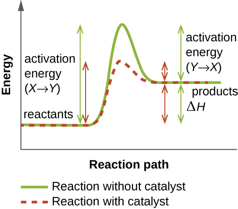 A graph with reaction path on the X axis and energy on the Y axis. A green line shows the reaction without a catalyst. This line starts flat at first and then increases. The flat portion is labeled reactants. The level of this increase is the activation energy (X to Y). The line then drops to a point above where the reactant line was; this new flat line is labeled products. The distance from the products to the peak of the graph is labeled activation energy (Y to X). The difference between the height of the reactants and the products is delta H. A red line shows this same reaction with a catalyst. The reactant and product levels are identical to the green line, but the height of the peak is much lower indicating decreased activation energy.