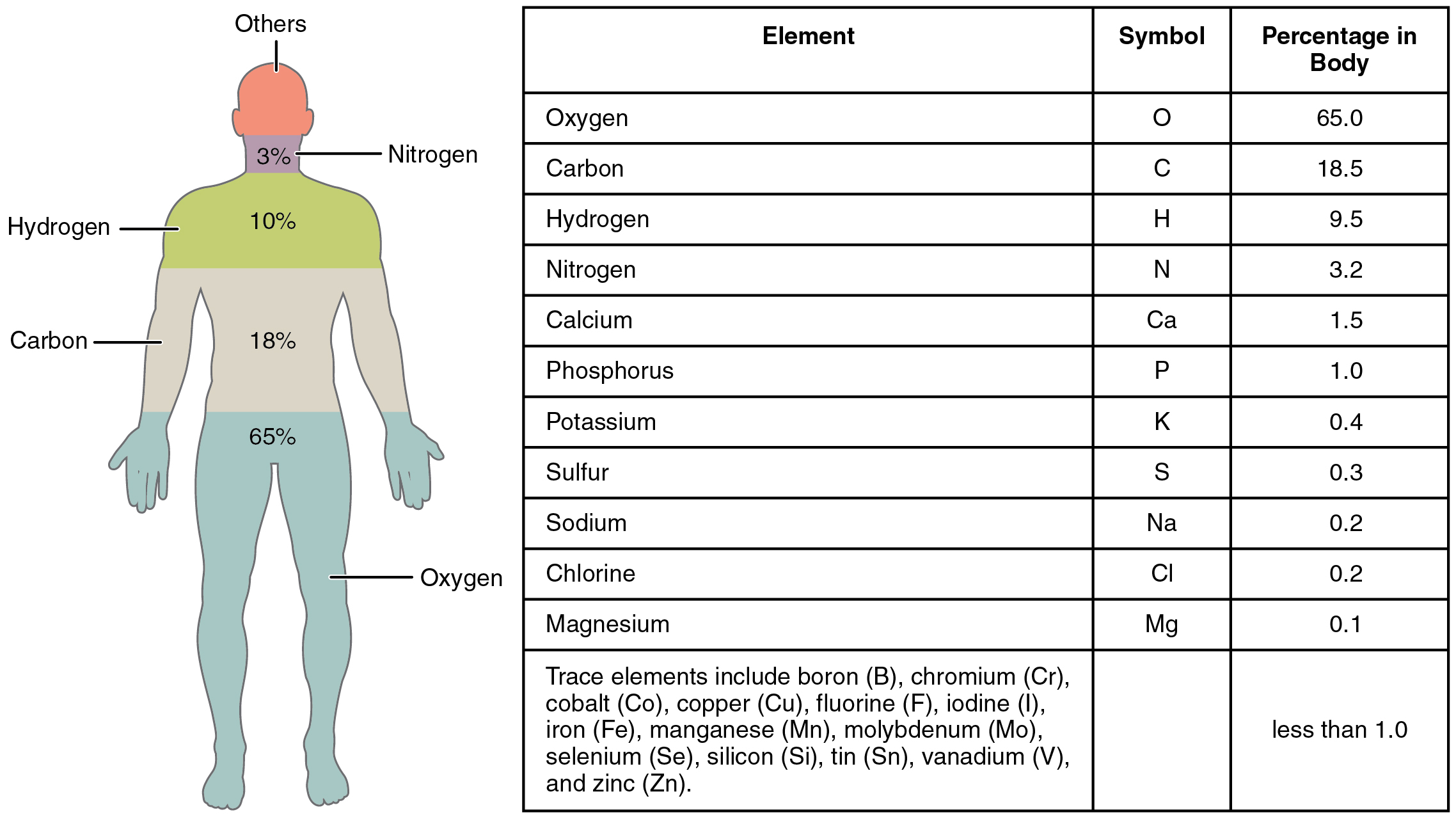 This figure shows a human body with the percentage of the main elements in the body, in the left panel. In the right panel, a table lists the elements and the percentages in the body.