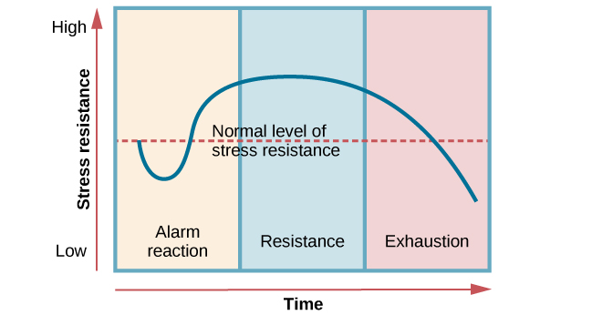 """A graph shows the three stages of Selye's general adaption syndrome: alarm reaction, resistance, and exhaustion. The x-axis represents time while the y-axis represents stress levels. The x-axis is labeled """"Time"""" and the y-axis is labeled """"Stress resistance."""" The graph shows that an increase in time and stress ultimately leads to exhaustion."""
