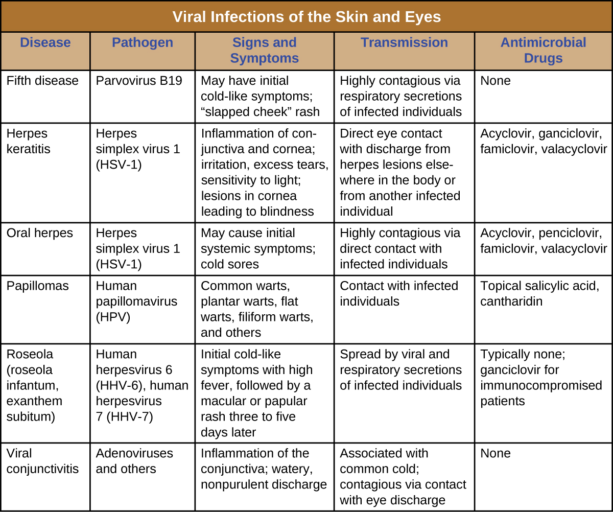 "Table titled: Viral Infections of the Skin and Eyes. Columns: Disease, Pathogen, Signs and Symptoms, Transmission, Antimicrobial Drugs. Fifth disease, Parvovirus B19, May have initial cold-like symptoms; ""slapped cheek"" rash, Highly contagious via respiratory secretions of infected individuals, None. Herpes keratitis, Herpes simplex virus 1 (HSV-1), Inflammation of conjunctiva and cornea; irritation, excess tears, sensitivity to light; lesions in cornea leading to blindness, Direct eye contact with discharge from herpes lesions elsewhere in the body or from another infected individual, Acyclovir, ganciclovir, famiclovir, valacyclovir. Oral herpes Herpes simplex virus 1 (HSV-1), May cause initial systemic symptoms; cold sores, Highly contagious via direct contact with infected individuals, Acyclovir, penciclovir, famiclovir, valacyclovir. Papillomas, Human papillomavirus (HPV), Common warts, plantar warts, flat warts, filiform warts, and others, Contact with infected individuals, Topical salicylic acid, cantharidin. Roseola (roseola infantum, exanthem subitum), Human herpesvirus 6 (HHV-6), human herpesvirus 7 (HHV-7), Initial cold-like symptoms with high fever, followed by a macular rash three to five days later, Spread by viral and respiratory secretions of infected individuals, Typically none; ganciclovir for immunocompromised patients. Viral conjunctivitis, Adenoviruses and others, Inflammation of the conjunctiva; watery, nonpurulent discharge, Associated with common cold; contagious via contact with eye discharge, None."