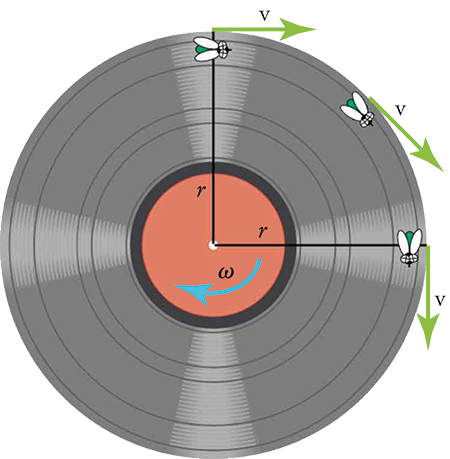 The figure shows an illustration of a vinyl record with an arrow omega (angular velocity) pointing in a clockwise direction. There are two lines for the radius, marked r, one going from the center up and the other going from the center to the right. There are three flies on the record. One is positioned at the top of the record on the vertical radius. A v (velocity) arrow points to the right. A second fly is half-way around the circumference toward the horizontal radius and an arrow v is pointing tangential to the fly. The third fly is on the circumference at the horizontal radius and an arrow v is pointing down.