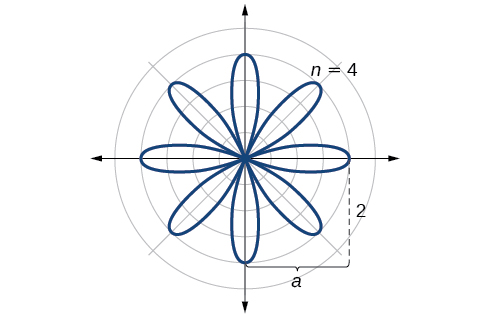 Sketch of rose curve r=2*cos(4 theta). Goes out distance of 2 for each petal 2n times (here 2*4=8 times).