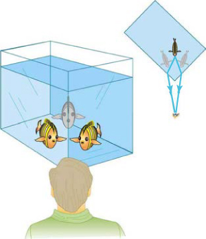 A man is looking at the corner of a fish tank. Although the fish is directly in his line of sight, he sees the fish to the right and left of the corner of the fish tank.