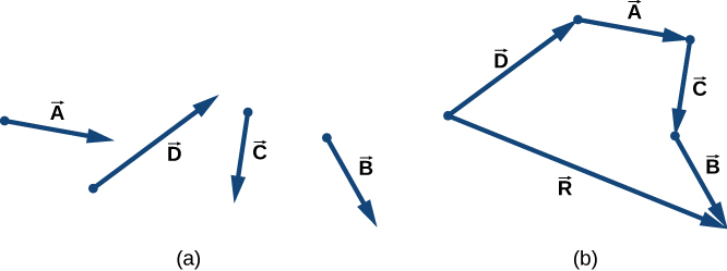 In figure a, four vectors, labeled A, B, C, and D are shown individually. In figure b, the vectors are shown arranged head to tail: Vector A's tail is at the head of D. Vector C's tail is at the head of A. And vector B's tail is at the head of C. Each vector is pointing in the same direction as it is in figure a. A fifth vector, R, starts at the tail of vector D and ends at the head of vector B.