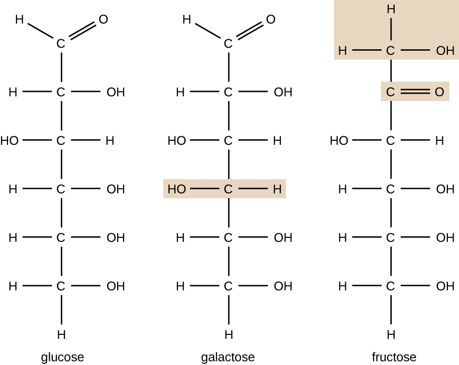 The chemical formula for glucose is 6 C's in the chain. The top C has a double bonded O. The next C has an OH on the right, the next C has an OH on the left, the next 3 Cs have OHs on the right, and the last 2 Cs have OHs on the right. The chemical formula for galactose is 6 Cs in a chain. The top C has a double bonded O. The next C has an OH on the right, the next 2 Cs have OHs on the left, and the last 2 Cs have OHs on the right. The chemical formula for fructose also has 6 Cs in a chain. The top C has an OH on the right. The next C has a double bonded O to the right. The next C has an OH to the left. The last 3 Cs have OHs to the right. All other bonds on these molecules are to Hs.