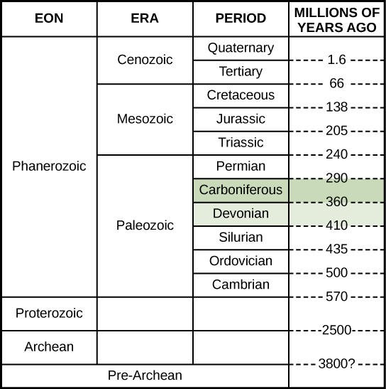 This chart shows a geological time scale, starting with the Pre-Archean eon about 3800 million years ago, and ending with the Quaternary period in the Cenozoic era in the Phanerozoic eon about 1.6 million years ago. The Devonian period and Carboniferous period are both in the Paleozoic era. The Devonian period began 410 million years ago and ended 360 million years ago. The Carboniferous period was from 360 million years ago to 290 million years ago.