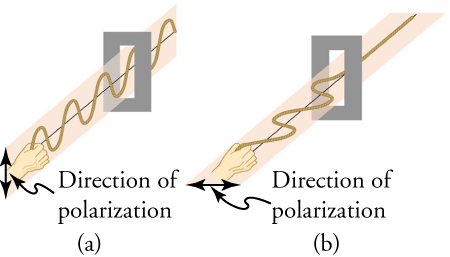 "This figure has two panels arranged side by side. The left panel, labeled ""(a)"", shows a hand holding one end of a wave moving in a vertical plane and passing through a vertically oriented slit. Next to the hand is a double-headed vertical arrow labeled ""Direction of polarization"". The right panel, labeled ""(b)"", shows a hand holding one end of a wave moving in a horizontal plane and passing through a horizontally oriented slit. Next to the hand is a double-headed horizontal arrow labeled ""Direction of polarization."
