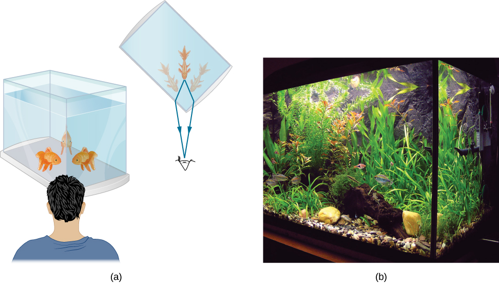 Figure a shows a drawing of a person looking at the corner of a fish tank. A fish in the corner appears as a double image of the fish, one image formed by rays passing through each of the sides meeting at the corner of the tank. Figure b shows a photograph of a similar situation.