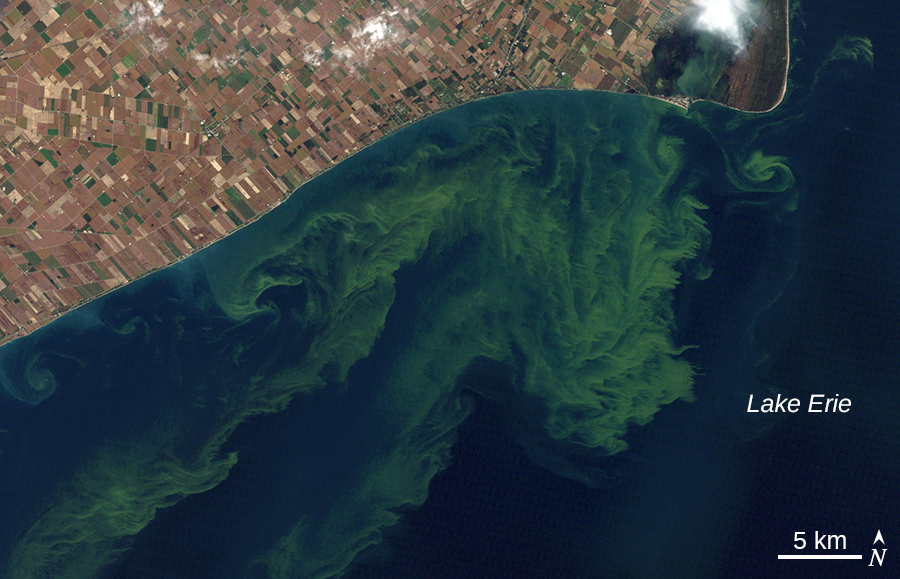 An aerial photo of green swirls in the water of lake Erie.