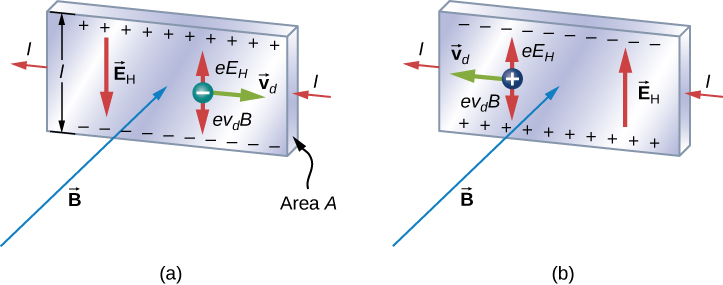 An illustration of the Hall effect: In both figures, the current in the strip is to the left and the magnetic field points into the page. In figure a, a negative charge is moving to the right with velocity v d. Positive charges accumulate at the top of the strip, negative charges at the bottom of the strip. An electric field E sub H points down. The moving charge experiences an upward force e E sub H and a downward force e v sub d B. In figure b, a positive charge is moving to the left with velocity v d. Negative charges accumulate at the top of the strip, positive charges at the bottom of the strip. An electric field E sub H points up. The moving charge experiences an upward force e E sub H and a downward force e v sub d B.
