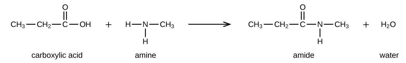 A chemical reaction is shown between a carboxylic acid and amine to form an amide and water. Structures are shown. The carboxylic acid is shown as a C H subscript 3 group bonded to a C H subscript 2 group bonded to a C atom with a double bonded O atom above and an O H group bonded to the right. There is a plus sign. The amine is shown as an N atom with two H atoms bonded to the bottom and left sides. A C H subscript 3 group is bonded to the right side of the N atom. To the right of an arrow, an amide is shown as a C H subscript 3 group bonded to a C H subscript 2 group bonded to a C atom which is double bonded to an O atom above and an N with an H atom bonded below. The N atom is bonded to a C H subscript 3 group. The final product indicated after a plus sign is water, H subscript 2 O.