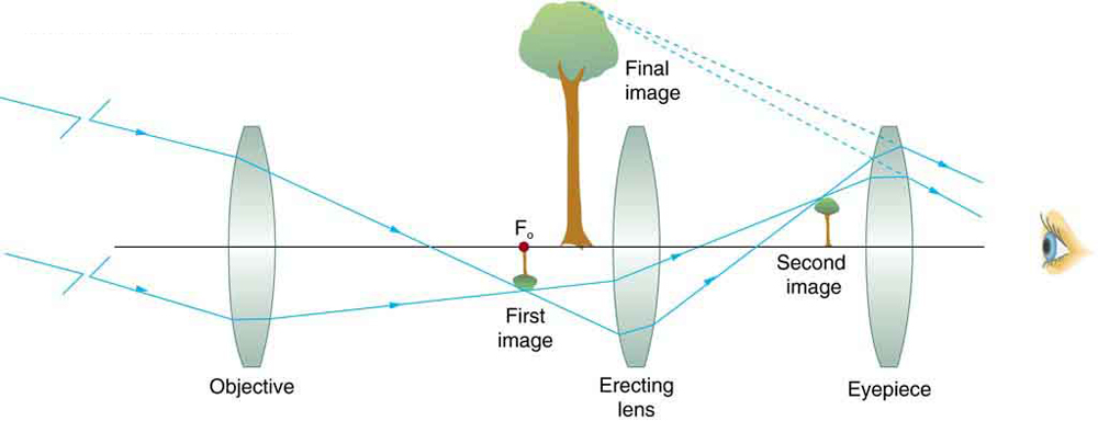 A ray diagram from left to right depicts a concave objective lens, a small inverted image of a tree, a magnified upright final image of tree, an erecting concave lens, a small upright image of a tree, concave lens as an eyepiece, and an eye to view on the same optical axis. Rays from a distant object strike the edges of the objective lens, converge at the focus of the focal point, form a small inverted image of the object and pass through the erecting lens, again forming the upright small image of the object, and finally, the rays pass through the eyepiece to the eye. Dotted lines joined backwards from the rays striking the eyepiece meet at a point where the final enlarged upright image of the object is formed.