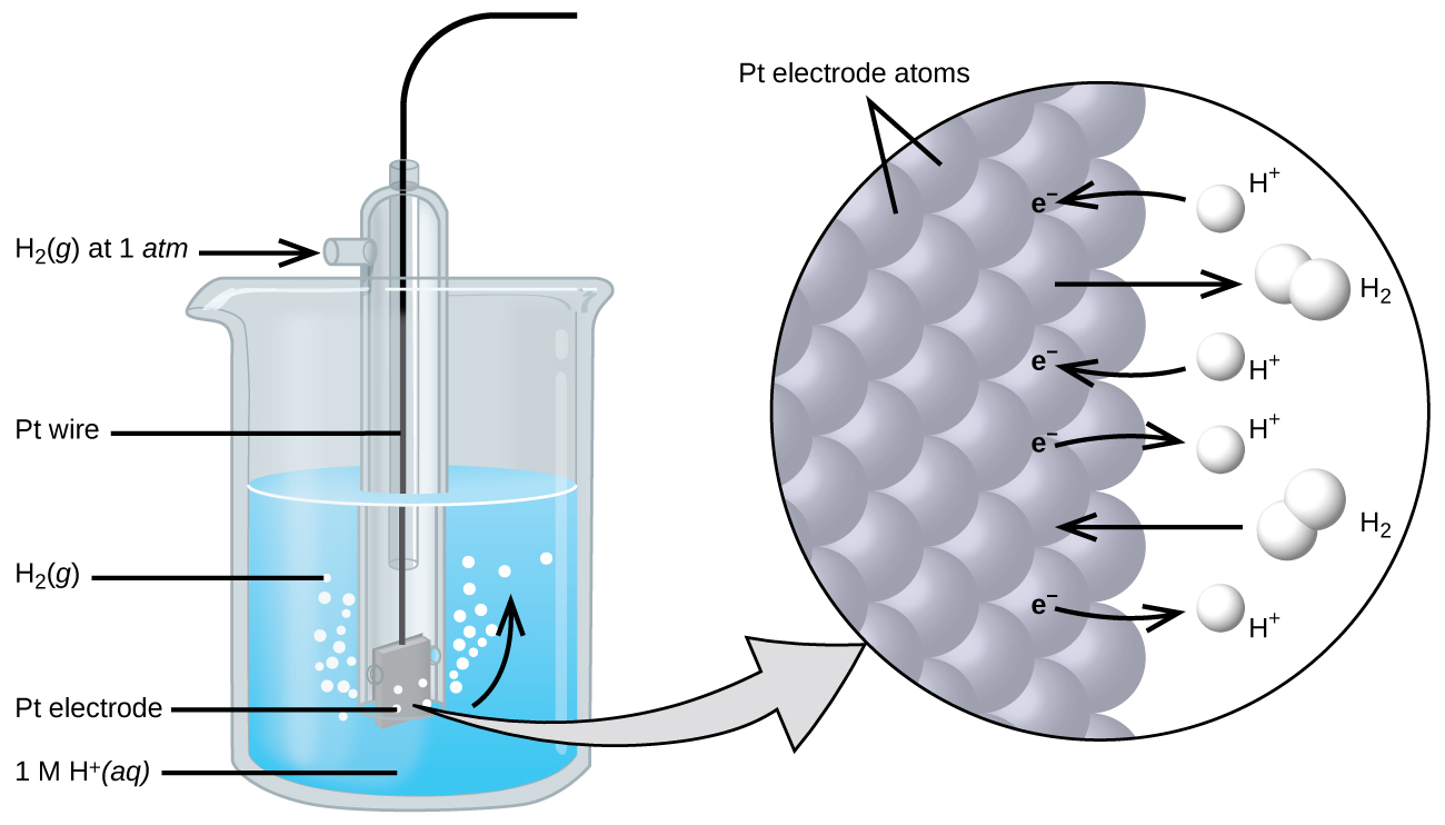 "The figure shows a beaker just over half full of a blue liquid. A glass tube is partially submerged in the liquid. Bubbles, which are labeled ""H subscript 2 ( g )"" are rising from the dark grayquare, labeled ""P t electrode"" at the bottom of the tube. Below the bottom of the tube pointing to the solution in the beaker is the label "" 1 M H superscript plus ( a q)."" A curved arrow points up to the right, indicating the direction of the bubbles. A black wire which is labeled ""P t wire"" extends from the dark grgrayare up the interior of the tube through a small port at the top. A second small port extends out the top of the tube to the left. An arrow points to the port opening from the left. The base of this arrow is labeled ""H subscript 2 ( g ) at 1 a t m."" A light greygray points to a diagram in a circle at the right that illustrates the surface of the P t electrode in a magnified view. P t atoms are illustrated as a uniform cluster of grey sgray which are labeled ""P t electrode atoms."" On the grey atograyace, the label ""e superscript negative"" is shown 4 times in a nearly even vertical distribution to show electrons on the P t surface. A curved arrow extends from a white sphere labeled ""H superscript plus"" at the right of the P t atoms to the uppermost electron shown. Just below, a straight arrow extends from the P t surface to the right to a pair of linked white spheres which are labeled ""H subscript 2."" A curved arrow extends from a second white sphere labeled ""H superscript plus"" at the right of the P t atoms to the second electron shown. A curved arrow extends from the third electron on the P t surface to the right to a white sphere labeled ""H superscript plus."" Just below, an arrow points left from a pair of linked white spheres which are labeled ""H subscript 2"" to the P t surface. A curved arrow extends from the fourth electron on the P t surface to the right to a white sphere labeled ""H superscript plus."""
