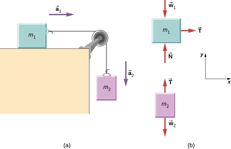 (a)  Block m sub 1 is on a horizontal surface. It is connected to a string that passes over a pulley then hangs straight down and connects to  block m sub 2. Block m sub 1 has acceleration a sub 1 directed to the right. Block m sub 2 has acceleration a sub 2 directed downward. (b) Free body diagrams of each block. Block m sub 1 has force w sub 1 directed vertically down, N directed vertically up, and T directed horizontally to the right. Block m sub 2 has force w sub 2 directed vertically down, and T directed vertically up. The x y coordinate system has positive x to the right and positive y up.