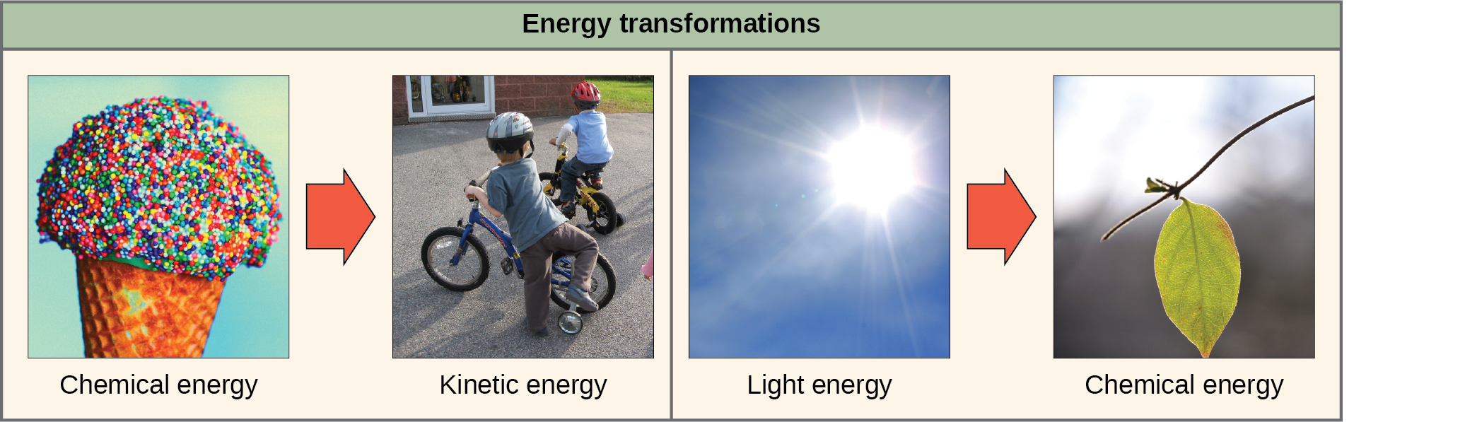 The left side of this diagram depicts energy being transferred from an ice cream cone to two boys riding a bike; this is described as chemical energy to kinetic energy. The right side depicts a plant converting light energy into chemical energy.