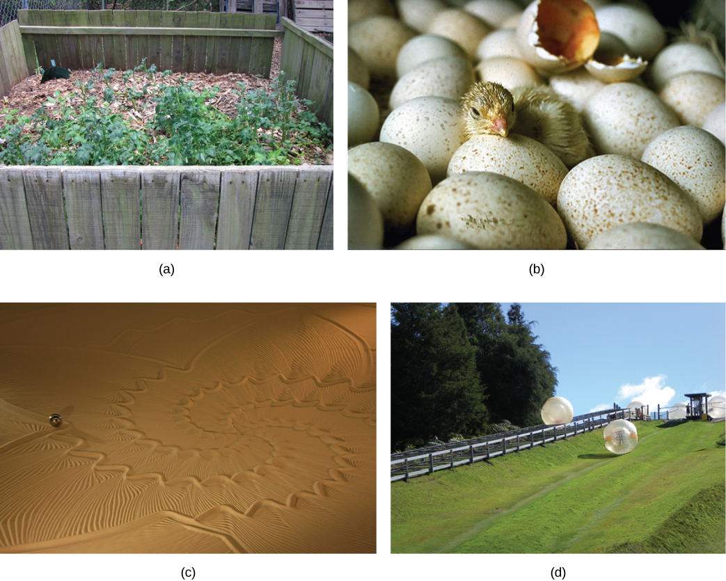 There are four photos show.  The first photo shows a pile of wood chips and dirt, with small plants growing from this.  The second photo shows a small baby bird breaking out of its egg as it hatches.  The third photo shows a large patch of desert where someone has drawn patterns in the sand.  The fourth photo shows a grassy hill outside where people climb into giant inflatable balls and roll down the hillside.