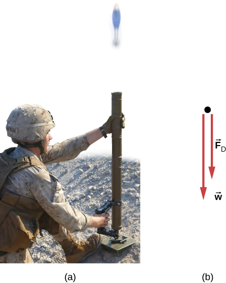 (a) A photograph of a soldier firing a mortar shell straight up. (b) A free body diagram of the mortar shell shows forces F sub D and w, both pointing vertically down. Force w is larger than force F sub D.