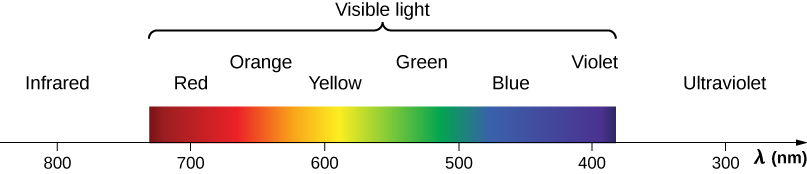The figure shows colors that are associated with different wavelengths of light in order of decreasing wavelength, lambda, measured in nanometers. Infrared starts at 800 nanometers. It is followed by visible light, which is a continuous distribution of colors with red at 700 nanometers, orange, yellow at 600 nanometers, green, blue at 500 nanometers, and violet at 400 nanometers. The distribution ends with ultraviolet which extends past the visible to about 300 nanometers.