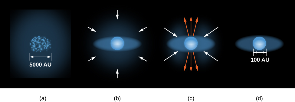 Illustration of the Formation of a Star. Part a, on the far left, shows a roughly spherical region containing many clumps of gas and dust. A scale is given to this region and is labeled 5000 AU. To the right is part b, showing one of these clumps as a sphere embedded in a faint disk of material. Arrows surround the sphere and disk, all pointing toward the center of the sphere, indicating inflow of material. Further to the right is part c, showing the same sphere and disk. Arrows are drawn pointing toward the disk to indicate inflow, and arrows perpendicular to the disk and pointing away from the poles of the sphere, indicating outflow of material. Finally, at far right, is part d, again showing a sphere embedded in a disk. No arrows are drawn. A scale is given for part d, and is labeled 100 AU.