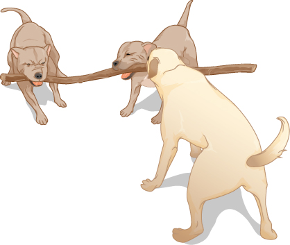 Three dogs pull on a stick.
