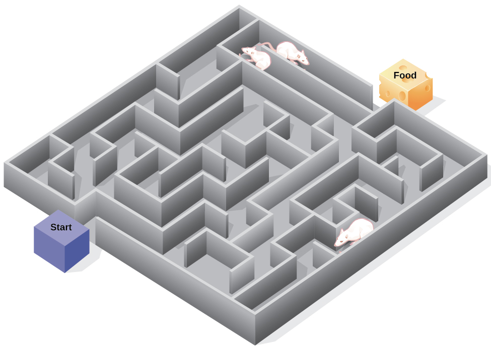 An illustration shows three rats in a maze, with a starting point and food at the end.