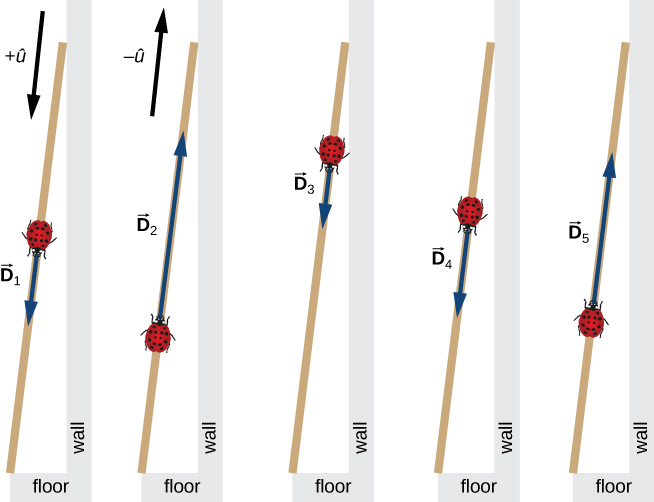 Five illustrations of a ladybug on a ruler leaning against a wall. The +u hat direction is toward the floor parallel to the ruler, and the – u hat direction is up along the ruler. In the first illustration, the ladybug is located near the middle of the ruler and vector D sub 1 points down the ruler. In the second illustration, the ladybug is located lower, where the head of vector D sub 1 is in the first illustration, and vector D sub 2 points up the ruler. In the third illustration, the ladybug is located higher, where the head of vector D sub 2 is in the second illustration, and vector D sub 3 points down the ruler. In the fourth illustration, the ladybug is located lower, where the head of vector D sub 3 is in the third illustration, and vector D sub 4 points down the ruler. In the fifth illustration, the ladybug is located lower, where the head of vector D sub 4 is in the fourth illustration, and vector D sub 5 points up the ruler.