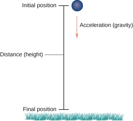 "This figure is a ball falling in a vertical path. The ball is at the top at the initial position. From the ball a vector is drawn vertically downward labeled ""acceleration"". The vertical line is labeled ""distance"". At the bottom of the line it is labeled ""final position"". There is also grass at the bottom of the figure."