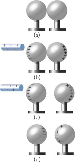 This figure has four parts, each consisting of a pair of spheres adjacent to each other. Each sphere is on a short pedestal, and all spheres and pedestals are equal in size. In Parts (a) and (b), the pair of spheres are touching each other, but in Parts (c) and (d), the pair of spheres are slightly separated from each other. In Part (a), there is no charge on either sphere. In Part (b), a rod marked with plus signs is shown close to the left sphere, which in turn has minus signs along its left edge. The right sphere has plus signs along its right edge. Part (c) is similar to Part (b), except for separation between the pair of spheres. In Part (d), minus signs are aligned along the right edge of the left sphere, and plus signs are aligned along the left edge of the right sphere. There is no rod in Part (d).