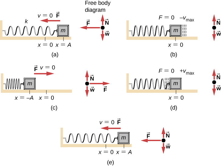 The motion and free body diagrams of a mass attached to a horizontal spring, spring constant k, at various points in its motion. In figure (a) the mass is displaced to a position x = A to the right of x =0 and released from rest (v=0.) The spring is stretched. The force on the mass is to the left. The free body diagram has weight w down, the normal force N up and equal to the weight, and the force F to the left. (b) The mass is at x = 0 and moving in the negative x-direction with velocity – v sub max. The spring is relaxed. The Force on the mass is zero. The free body diagram has weight w down, the normal force N up and equal to the weight. (c) The mass is at minus A, to the left of x = 0 and is at rest (v =0.) The spring is compressed. The force F is to the right. The free body diagram has weight w down, the normal force N up and equal to the weight, and the force F to the right. (d) The mass is at x = 0 and moving in the positive x-direction with velocity plus v sub max. The spring is relaxed. The Force on the mass is zero. The free body diagram has weight w down, the normal force N up and equal to the weight. (e) the mass is again at x = A to the right of x =0 and at rest (v=0.) The spring is stretched. The force on the mass is to the left. The free body diagram has weight w down, the normal force N up and equal to the weight, and the force F to the left.