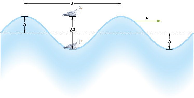 Figure shows a wave with the equilibrium position marked with a horizontal line. The vertical distance from the line to the crest of the wave is labeled x and that from the line to the trough is labeled minus x. There is a bird shown bobbing up and down in the wave. The vertical distance that the bird travels is labeled 2x. The horizontal distance between two consecutive crests is labeled lambda. A vector pointing right is labeled v subscript w.