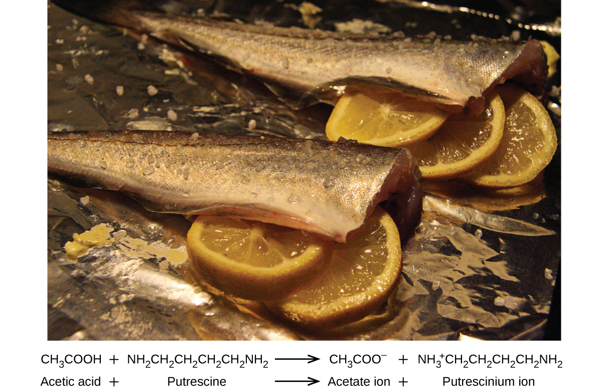 An image is shown of two fish with heads removed and skin on with lemon slices placed in the body cavity. The first line of an equation below the image reads C H subscript 3 C O O H plus N H subscript 2 C H subscript 2 C H subscript 2 C H subscript 2 C H subscript 2 N H subscript 2 arrow C H subscript 3 C O O superscript negative sign plus N H subscript 3 superscript positive sign C H subscript 2 C H subscript 2 C H subscript 2 C H subscript 2 N H subscript 2. The second line of the equation reads Acetic acid plus sign Putrescine arrow Acetate ion plus sign Putrescinium ion.