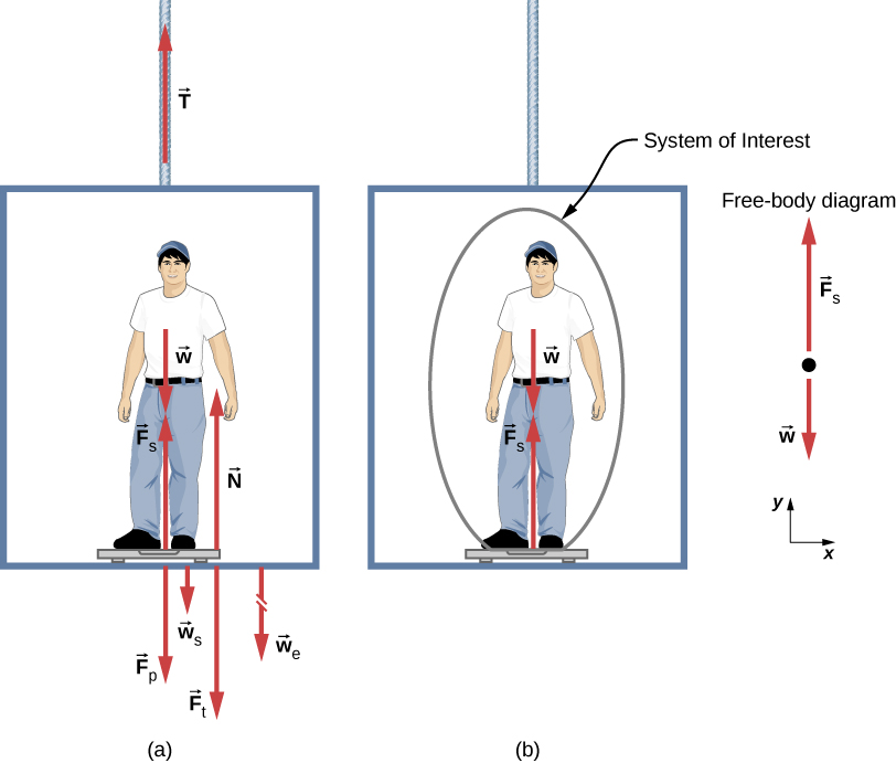 A person is standing on a bathroom scale in an elevator. His weight w is shown by an arrow near his chest, pointing downward. F sub s is the force of the scale on the person, shown by a vector starting from his feet pointing vertically upward. W sub s is the weight of the scale, shown by a vector starting at the scale pointing pointing vertically downward. W sub e is the weight of the elevator, shown by a broken arrow starting at the bottom of the elevator pointing vertically downward. F sub p is the force of the person on the scale, drawn starting at the scale and pointing vertically downward. F sub t is the force of the scale on the floor of the elevator, pointing vertically downward, and N is the normal force of the floor on the scale, starting on the elevator near the scale pointing upward. (b) The same person is shown on the scale in the elevator, but only a few forces are shown acting on the person, which is our system of interest. W is shown by an arrow acting downward, and F sub s is the force of the scale on the person, shown by a vector starting from his feet pointing vertically upward. The free-body diagram is also shown, with two forces acting on a point. F sub s acts vertically upward, and w acts vertically downward. An x y coordinate system is shown, with positive x to the right and positive y upward.