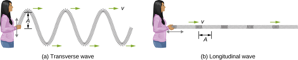 Figure a, labeled transverse wave, shows a person holding one end of a long, horizontally placed spring and moving it up and down. The spring forms a wave which propagates away from the person. This is labeled transverse wave. The vertical distance between the crest of the wave and the equilibrium position of the spring is labeled A. Figure b, labeled longitudinal wave, shows the person moving the spring to and fro horizontally. The spring is compressed and elongated alternately. This is labeled longitudinal wave. The horizontal distance from the middle of one compression to the middle of one rarefaction is labeled A.
